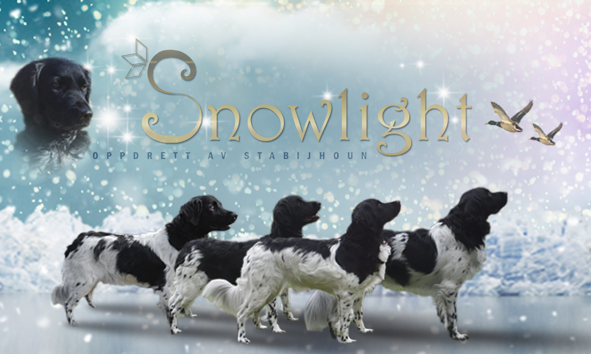 kennel Snowlight
